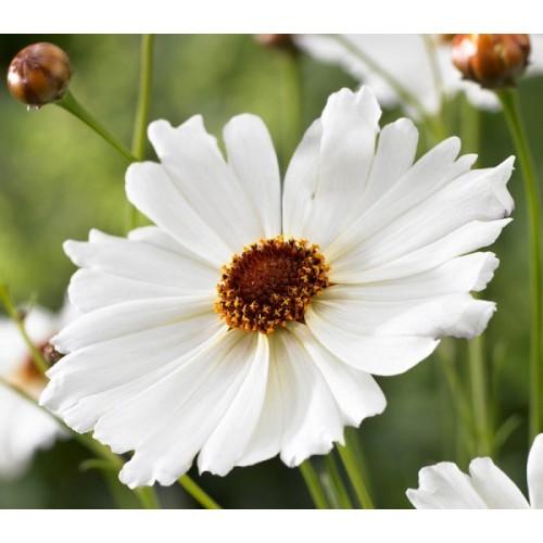 Silikonový žilkovač  - střed květin - větší