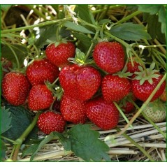 Flavouring 20 ml - STRAWBERRY